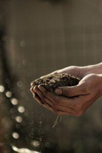 blessing your garden
