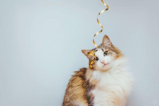 Summon a Cat Familiar