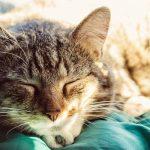 Herbal Sleep Aid