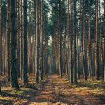 The Fortune of Snakebark Woods